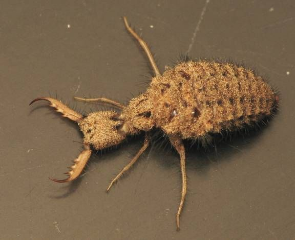 125 best 2014 Science Olympiad - Entomology images on Pinterest - entomology scientist resume