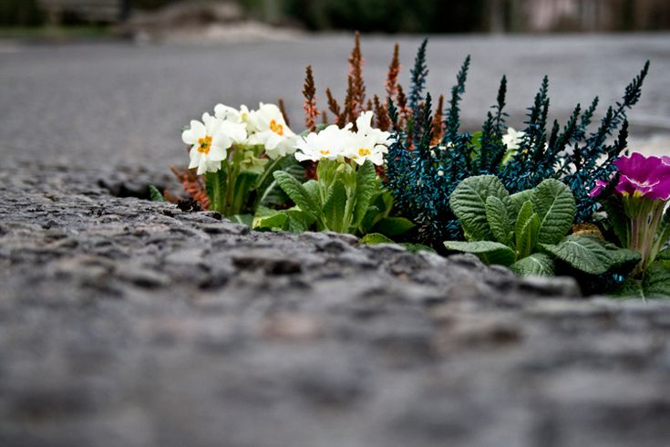 """Pothole Gardens - Pete Dungey: To highlight potholes in England. """"If we planted one of those in every hole, it would be like a forest in the road"""", says Pete."""