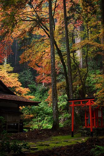Mysterious forest, Kozan-ji temple, Kyoto, Japan