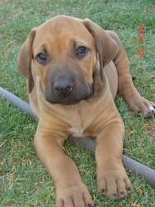 THE PERFECT SOUTH AFRICAN DOG MIX AND MY FAVE DOGGIE MIX