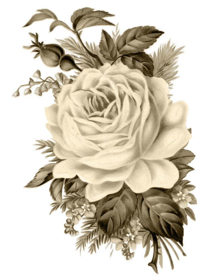 free-vintage-rose-transfer-FPTFY-sepia.jpg (2550×3300)