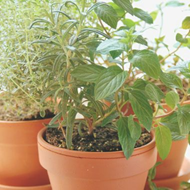 "Ten herbs for growing indoors this winter, though we know ""sunny window"" can be a tall order... from Organic Gardening"