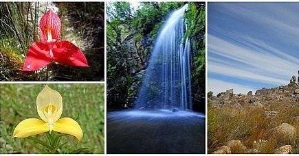 Things to do in Porterville: Take a hike up the mountain to the Groot Winterhoek Wilderness Areawhich is 30 608 hectares. If you are lucky you can see the DisaUniflora (the red disa) along the streams in the Reserve. You can also stay over in chalets to break up the long hikes.  Find out more by contacting Cape Nature at 022 931 2860 and for accommodation and permit bookings 021 483 0190.  Website: www.capenature.co.za #disa #disaflower #wildflowers #reserve #waterfall
