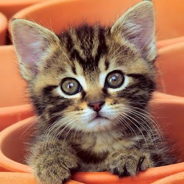 sweet baby: Kitty Cat, Pet, Flowers Pots, Adorable Kittens, Baby Kittens, Inspiration Pictures, Cat Photo, Desktop Wallpapers, Little Flowers