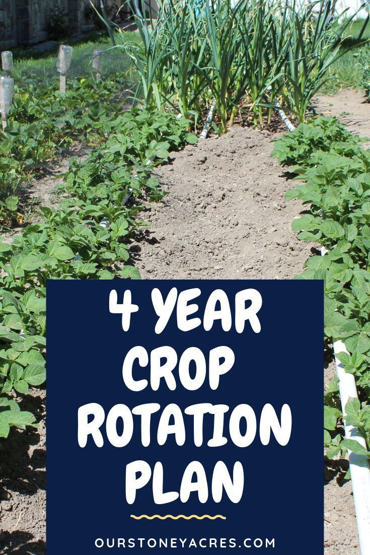 Follow This 4 Year Crop Rotation Plant For Your Backyard Garden Crop Rotation Is An Important Crop Rotation Organic Gardening Pest Control Survival Gardening Backyard garden crop rotation