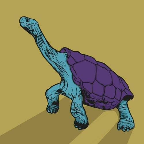 I was going to try and spend the week on this. But Im quite happy with this result. #galapagos🐢 #galapagostortoise #art #illustration #digitalart #graphic design #flatcolor #2tone #purple #turqoise #tortoiseart #tortoise #comic #color #arte #turtleart #terrapin #shellshocked