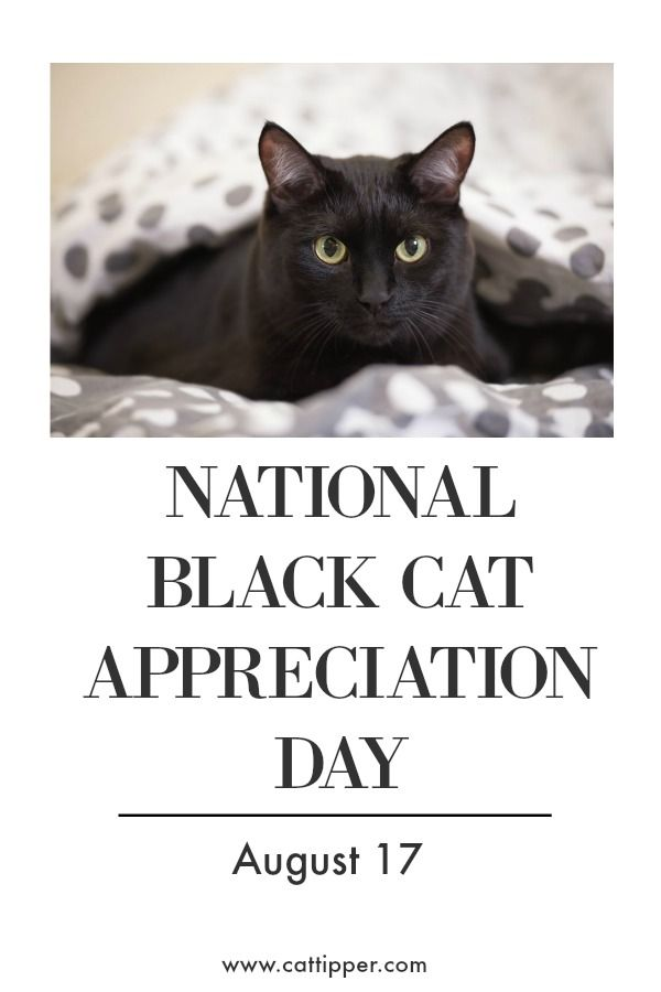 Celebrate National Black Cat Appreciation Day August 17 Blackcats Blackcat Petholidays Black Cat Appreciation Day National Black Cat Day Black Cat