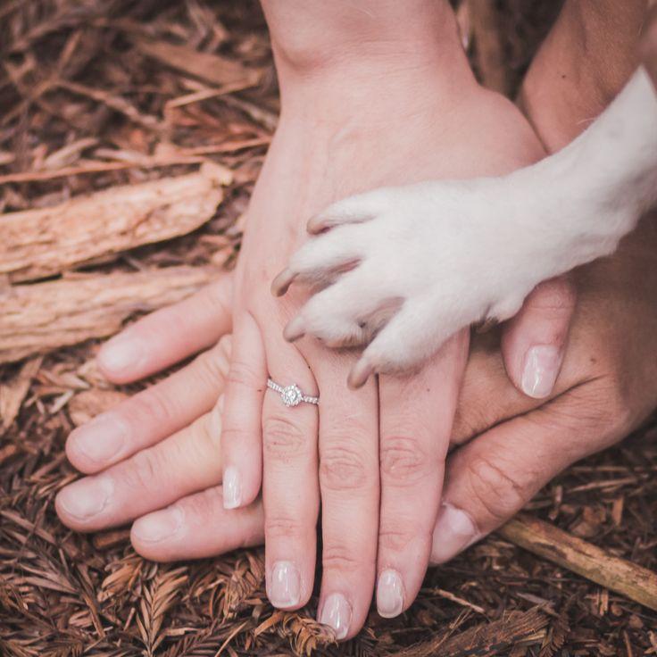 Mejores 73 imágenes de Mis Bodas - My Weddings en Pinterest