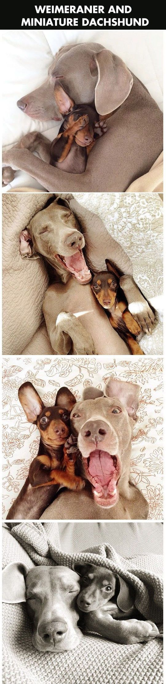 Two dogs will melt your heart.
