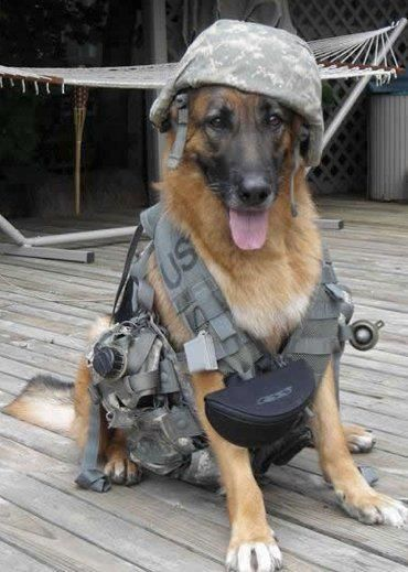 Heroes: Service Dog