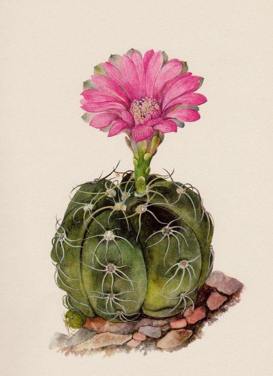 Bolso De Mano - Flor De Cactus 7 Por Vida Vida 2Jv2Itq8y