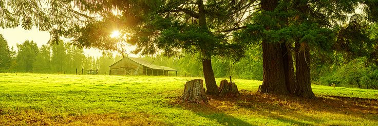 Alexander Vershinin - Your Silence #sunset #magic #tree