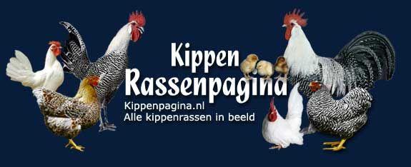 Kippenrassen Pagina - KippenRas Watermaalse Baardkriel