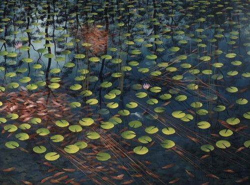 lin onus - water lilies in dingo spring