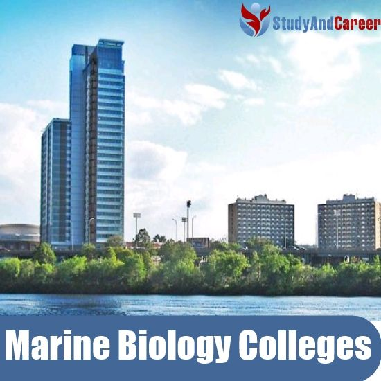 Top Marine Biology Colleges in USA