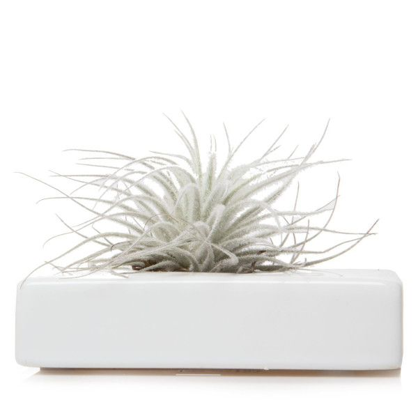 Swayzak, Ceramic Flower Vase and Air Plant Holder by Chive