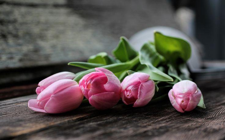 Скачать обои цветы, розовые, лепестки, тюльпаны, раздел цветы в разрешении 1440x900