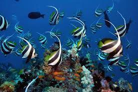 maldives coral reef - Google Search