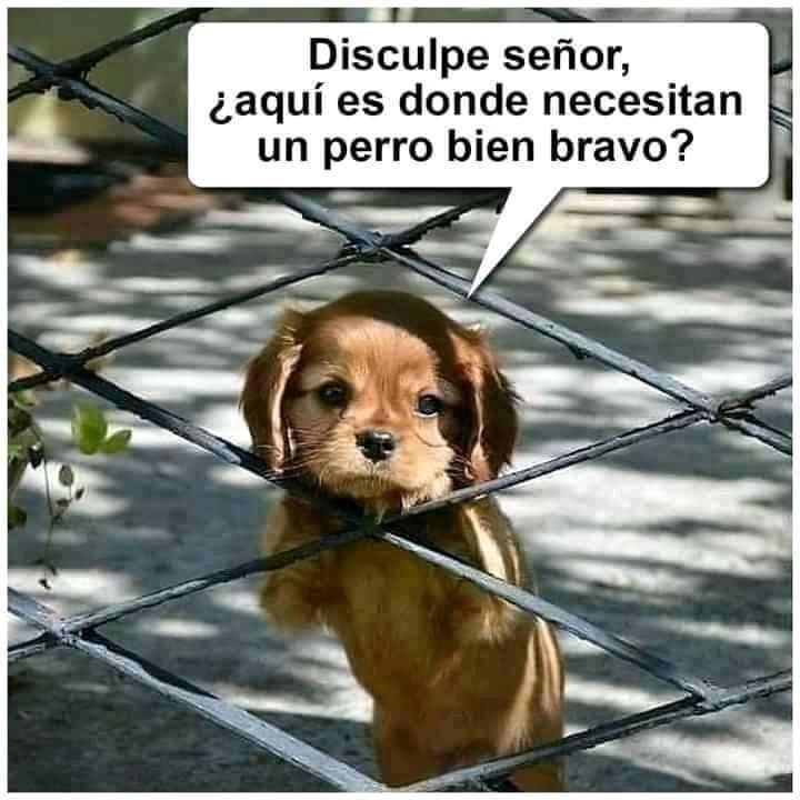 Discupen Senores Imagenes De Animales Bonitos Amor De Perro Memes Perros