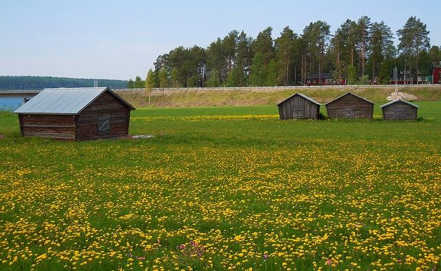 Barns in Gäddvik, Luleå, Sweden, via Flickr.