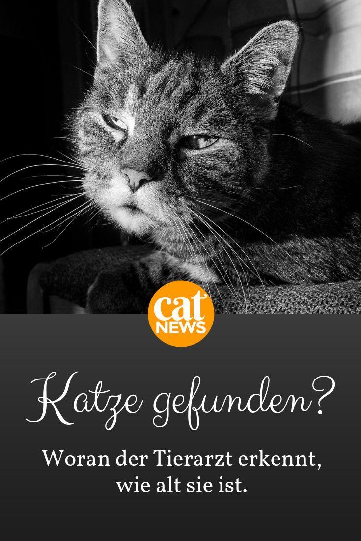 Katze Gefunden So Schatzt Der Tierarzt Das Alter Tierarzt