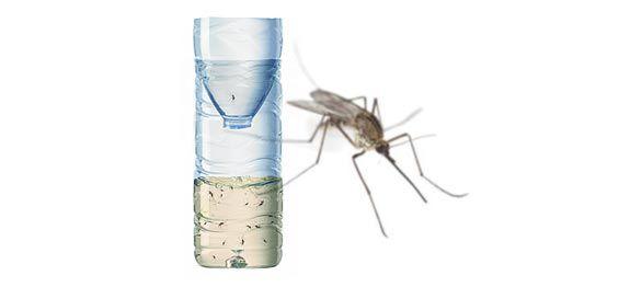 Fabriquer un piège écologique anti moustiques