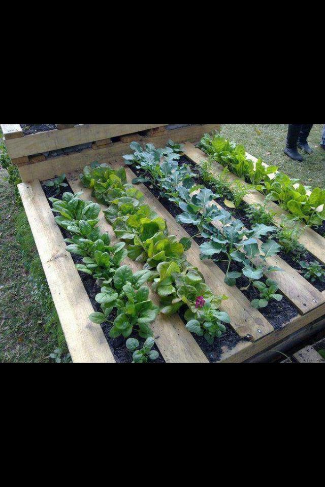 .jardinage