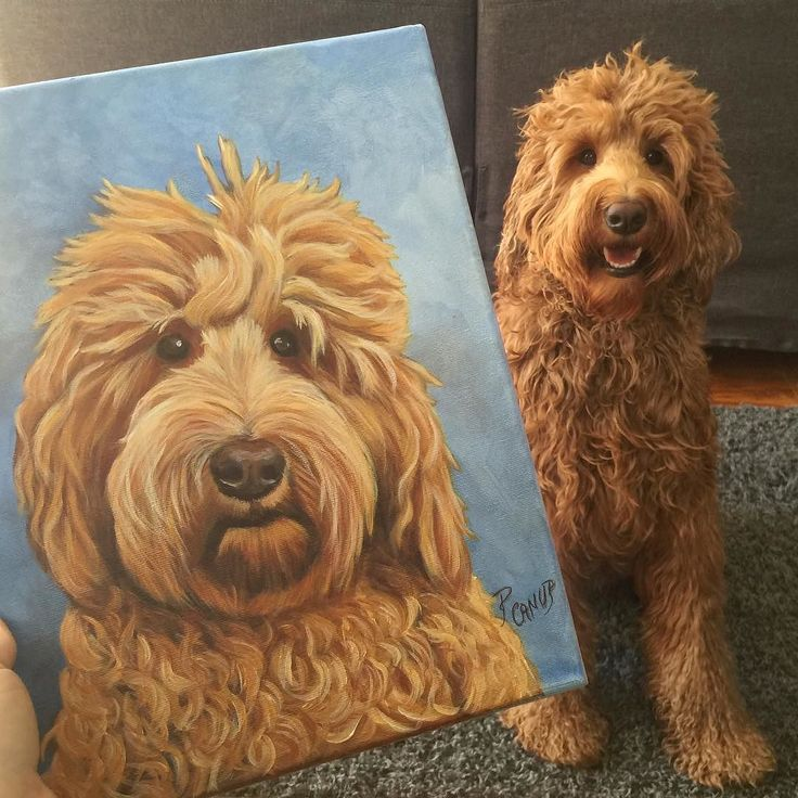That's a very fine portrait if I do say so myself  My doodle pal Nacho sent this fantastic painting of ME for an early birthday gift! Thank you sooo much @nacho.doodle.dearing!  #oliverthegoldendoodle #goldendoodle