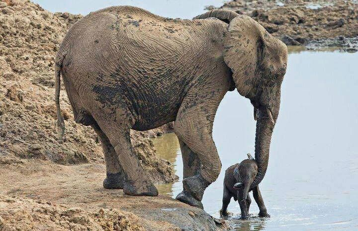 Watchful mother supporting her little one at the waterhole | By Melissa Martin
