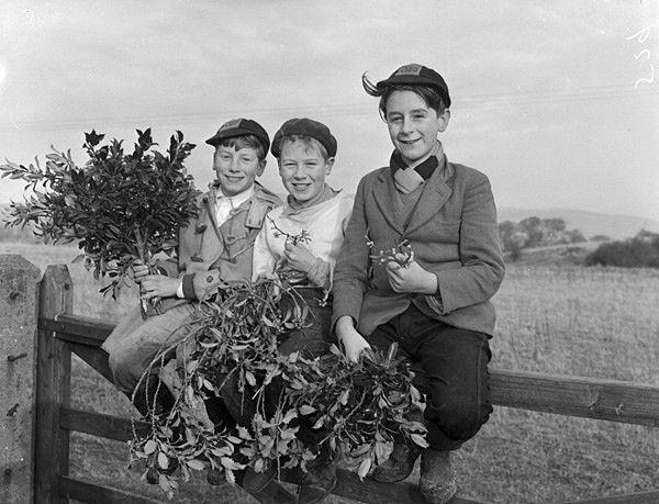 #kiss #mistletoe #Christmas #flowers & #plants #Natale! #Gardening #christmasball #ball #palladinatale #christmastree #alberodinatale #fir #abete #berry #bacche #red #rosso #pungitopo #holly