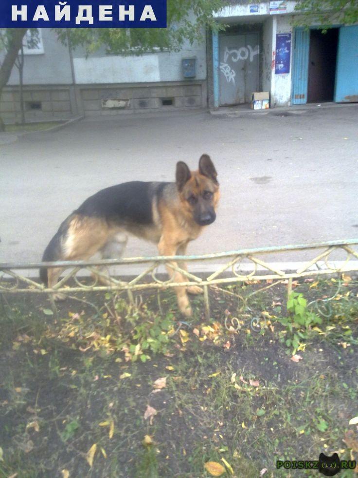 Найдена собака кобель немецкая овчарка г.Красноярск http://poiskzoo.ru/board/read31418.html  POISKZOO.RU/31418 В Октябрьском районе найден молодой кобель немецкой овчарки. Ищем старого хозяина  РЕПОСТ! @POISKZOO2 #POISKZOO.RU #Найдена #собака #Найдена_собака #НайденаСобака #Красноярск