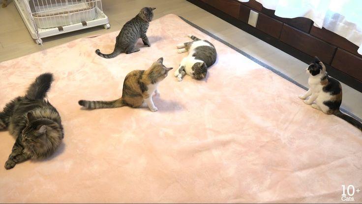おもしろそうにホットカーペットで遊ぶ猫