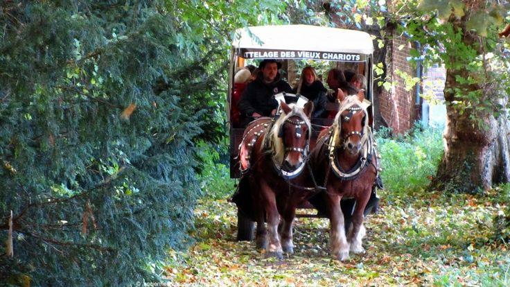 Promenade en calèche dans le parc du Château Saint Just - http://pomme-cidre-tradition.fr/
