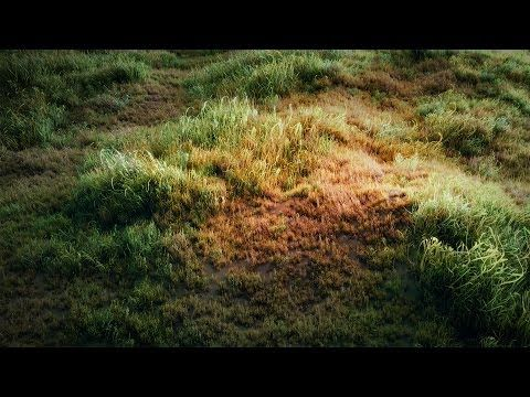 Blender Tutorial: How to make a grass field? - YouTube