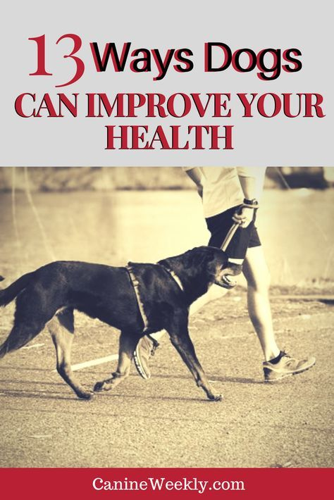 a study of the effects of dog ownership on mental health This study does not answer whether pet dogs have direct effects on children's mental health or whether other factors associated with acquisition of a pet dog benefit their mental health dog ownership and physical activity: a review of the evidence.