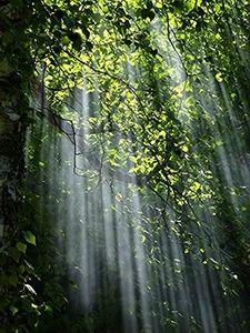 """La sylvothérapie ou comment se ressourcer dans un """"bain de forêt""""..."""