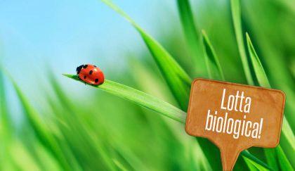 8 piante che attirano gli insetti utili a eliminare i parassiti delle piante    Giardinieri in affitto