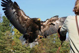 Zámecký park v Lednici nabízí letecké ukázky dravých ptáků