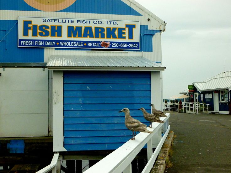 My Panoramio Google Earth Pictures: Sidney, BC - Fish Market