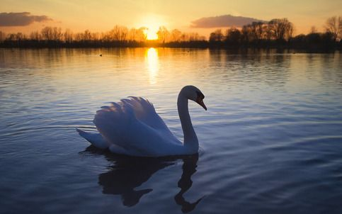 SWAN GLOSSY PHOTOS + BONUS - YOUR OWN PHOTO OR YOUR FAVORITE PHOTO OR THE PHOTO OF YOUR LOVED ONES - FREE!  FREE SHIPPING WORLD WIDE! BUY ONE & GET TWO FREE! PURCHASE THESE PHOTOS AND RECEIVE YOUR OWN PHOTO WITH FREE SHIPPING! You need to send your digital photo by email in order to get your...