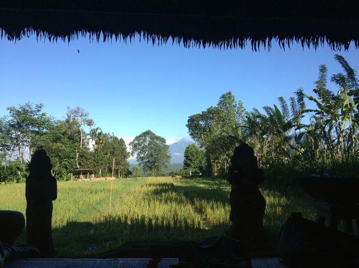Rice Paddies View