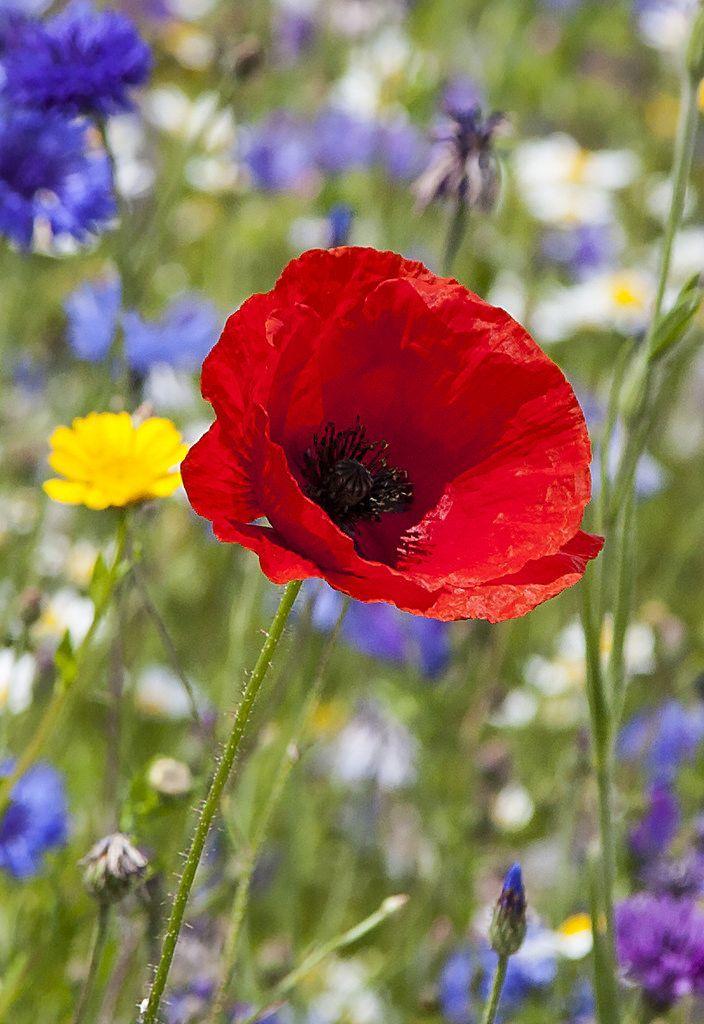 Pin Von Bedeutung Von Blumen Auf Bedeutung Von Blumen Bedeutung Von Blumen Blumen