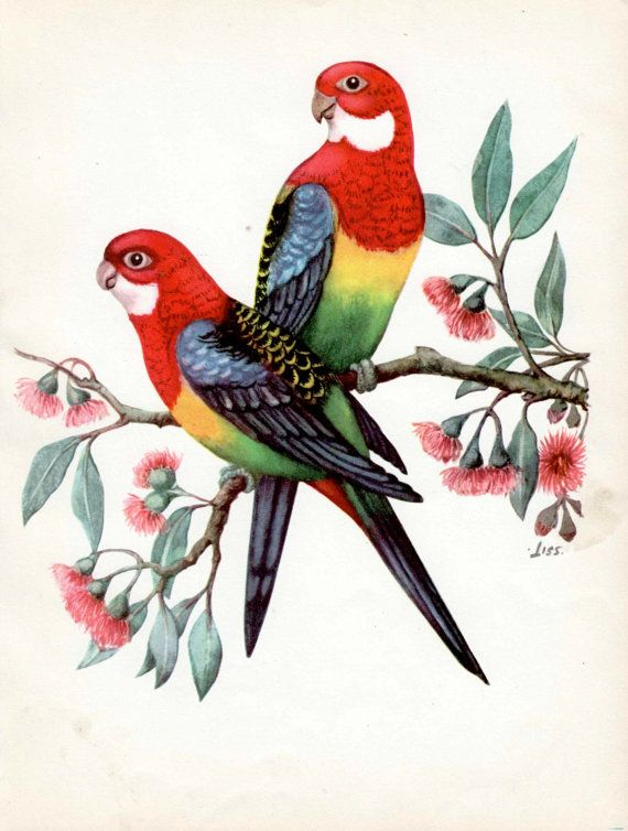 Hey, I found this really awesome Etsy listing at https://www.etsy.com/au/listing/249687201/pair-of-eastern-rosella-birds-australian