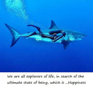 Swim with Great White Sharks...  Without a cage.