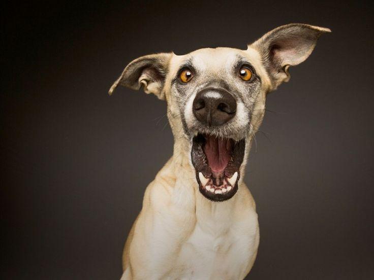 Смешные фото морды животных