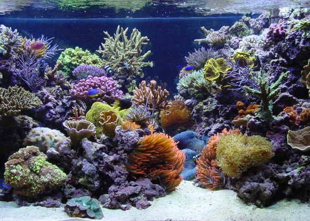 Another Beautiful Reef Tank