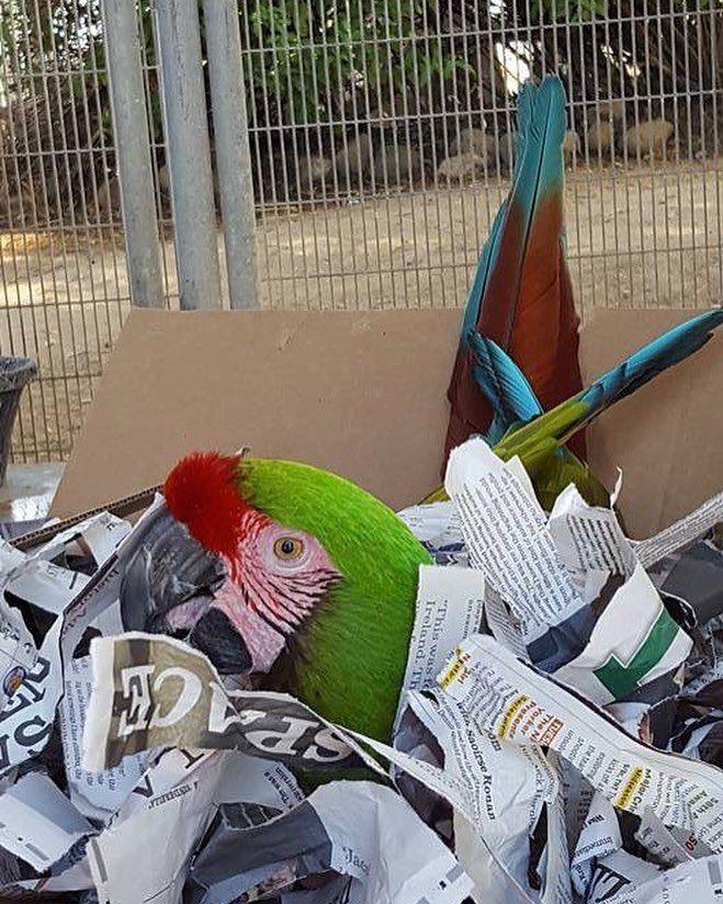 Www Bing Com1 Microsoft Way Redmond: 525 Best Parrots Images On Pinterest
