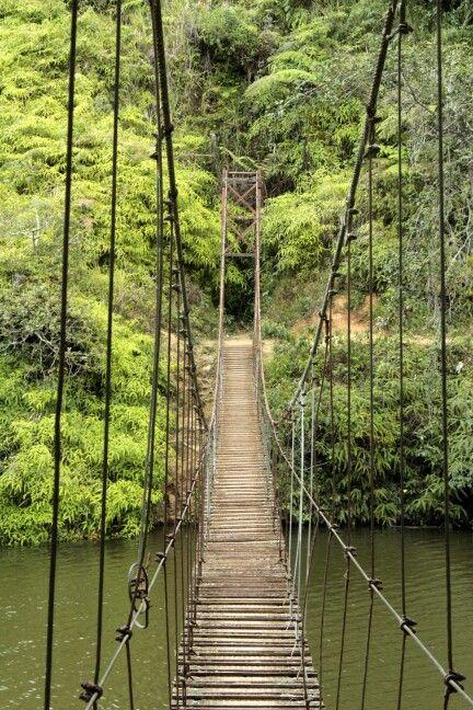 Puente hamaca en lago Garzas Adjuntas,  Puerto Rico