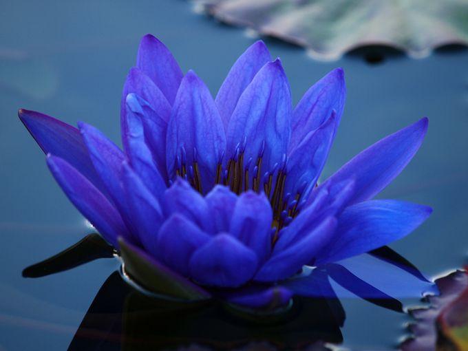 Самые необычные цветы мира | Для дачников.ру