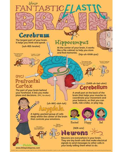 Fantastic Elastic Brain Poster. Love this! There is a book to go with it as well.